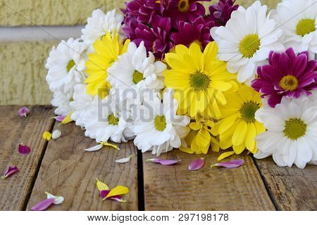 Pink, Yellow And White Chamomile Flowers Border. Birthday, Mother's Day, Valentine's Day, March 8, W