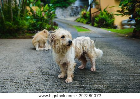 Two Wet Dogs In Tropical Island After Rain