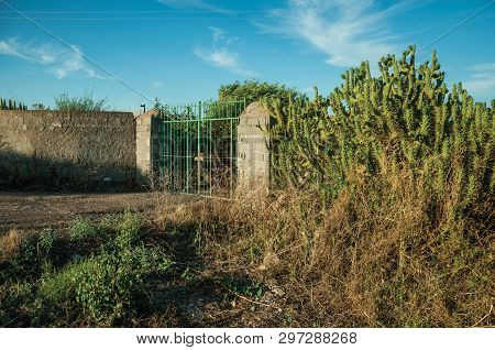Farmstead Gate Made Of Iron On Sunset, With Flowering Cactus Next To The Fence Near Elvas. A Graciou