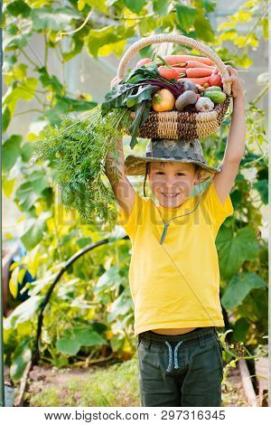 Cute Little Boy Holding A Bunch Of Fresh Organic Vegetables In Domestic Garden. Harvest In A Basket