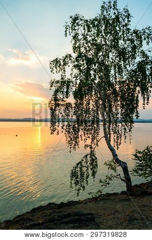 Summer landscape - summer trees at the edge of the cliff and lake lit by sunset light. Colorful summer water landscape view