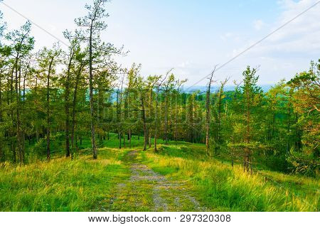 Forest landscape with trees, mountain slopes and wide path under soft sunset light, mountain forest scene. Natural forest in the mountains