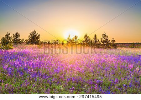 Beautiful Spring Landscape With  Flowering Purple Flowers On Meadow And Sunrise. Wildflowers Bloomin