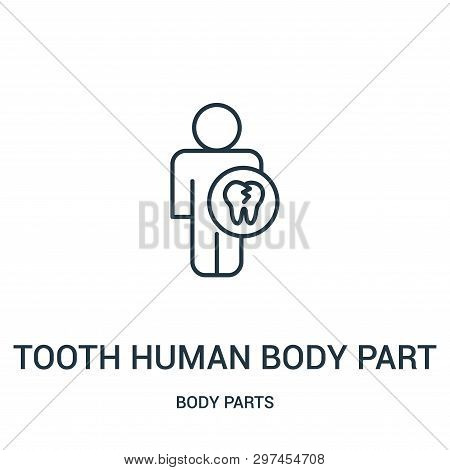 Tooth Human Body Part Icon Isolated On White Background From Body Parts Collection. Tooth Human Body