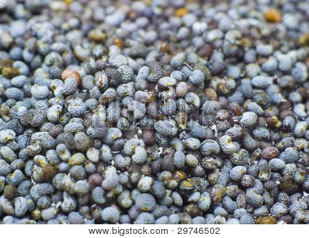 Poppy grains at the big approach.Natural background. poster
