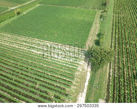 An image of an aerial view of a vineyard in Breisgau, Germany