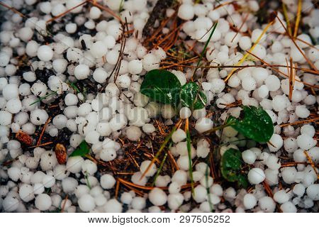 Hailstones On Ground In Macro. Big Hailing Close-up. Natural Background Of Hail. Hailstorm Dropping