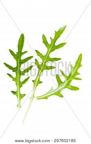 The Arugula Leaves Isolated On White Background.