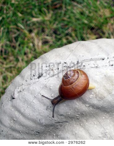 actual snail on top of a manufactured stone snail poster