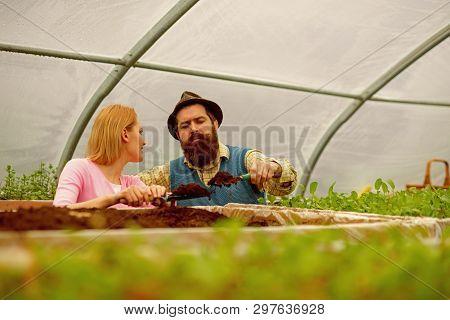 Soil Enrichment. Soil Enrichment With Organic Fertile. Soil Enrichment Concept. Soil Enrichment By C