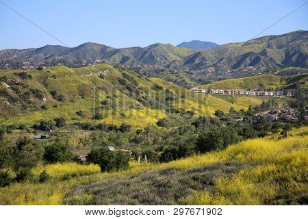 California Wild Flowers. Super bloom. Southern California wild flower super bloom. California hills awash with wild flowers blooming after record rain fall. Hills and mountains with wild flowers.