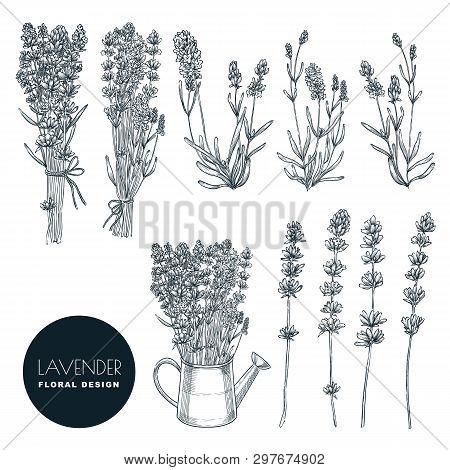 Lavender Flowers Set, Vector Sketch Illustration. Hand Drawn Bouquets And Floral Design Elements. La