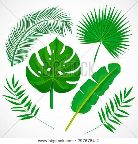 Flat Palm Leaves Set. Tropical Plants Icons Collection. Banana, Monstera, Palmetto, Coconut Leaf Iso