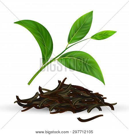 Fresh And Dry Vector Green Tea Leaves. Black Ceylon Tea Leaves Isolated Clipart. Herb, Twig Design E