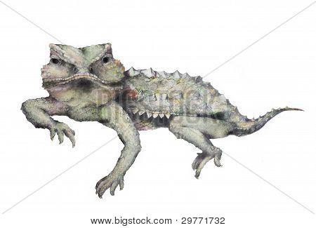Horned Toad Illustration