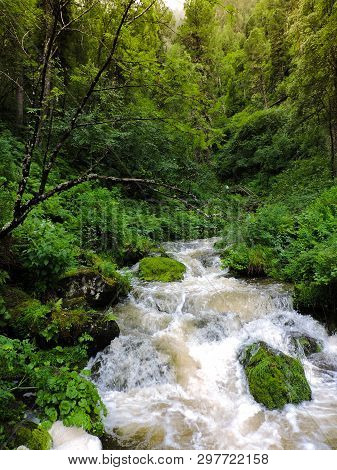Misty River Through A Forest. Stream In The Wood. Beautiful Natural Scenery Of River In The Forest.