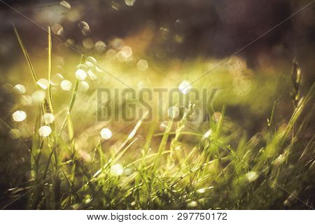 Nature Blurred Bokeh Background. New Spring Grass On Sunny Light. Defocus Summer Day. Springtime Con