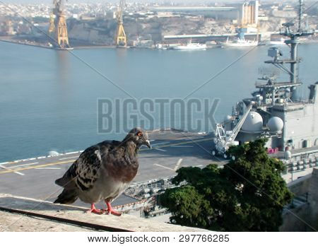 Grand Harbor, Valletta Malta.- Circa 2006 - A Carrier Pigeon Stands On The Wall Overlooking The Gran