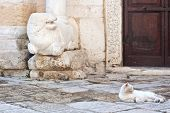 Cat next to the Temple of St. John at the Sepulchre Brindisi. Italy poster