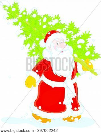 Santa Claus Carrying A Prickly Green Fir Tree From A Snowy Winter Forest To Decorate It For Christma