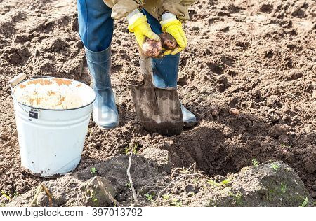 Fragment Of Legs Digging Soil With Shovel Close Up View. Woman Digging The Soil To Harvested Potatoe