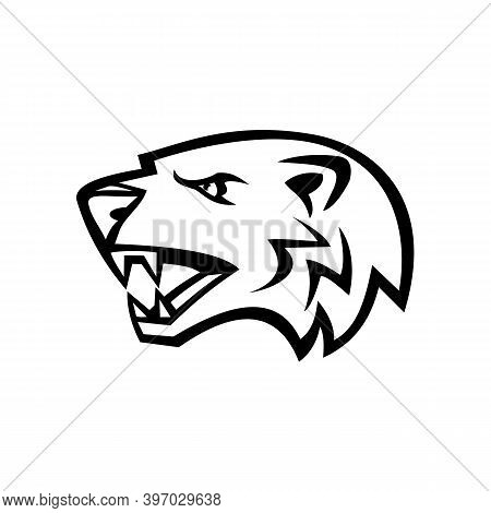 Mascot Illustration Of Head Of An Angry American Badger, A North American Badger, Similar To The Eur