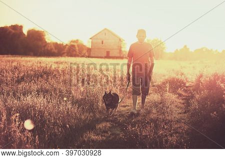 A Man Walks With A Dog In A Field At Sunset. Man Holding The Dog On A Leash
