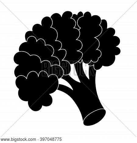 Broccoli. Silhouette. Inflorescence Of Asparagus Cabbage. Vector Illustration. Isolated White Backgr