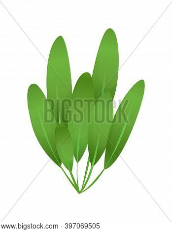 Grass Or Bushes. Green Realistic Spring Grass. Fresh Plants, Garden Botanical Greens, Herbs And Leav