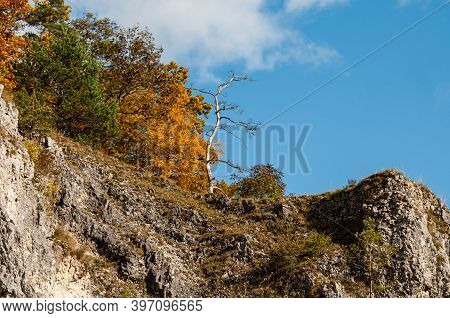Deciduous Trees In Autumn Leaf Colors Growing On A Cliff Of Jurassic Limestone In Swabian Alb In Ger