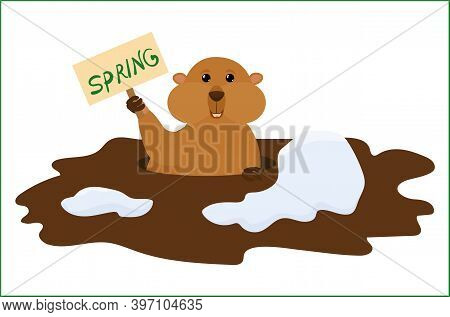 Groundhog Day Vector Cartoon Background With Cute Marmot Holding Sign With Letters Spring. Tradition