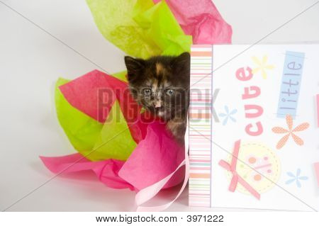 A kitten sits inside of a gift bag designed for a newborn baby poster
