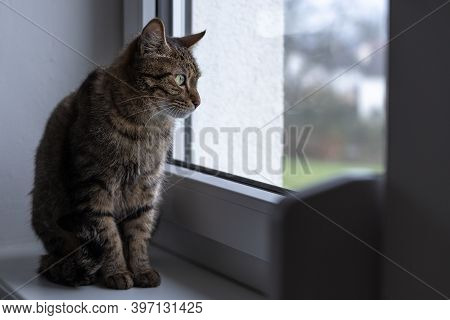 Cat Sits On Top Of The Window Sill And Looks Outside Through The Window.