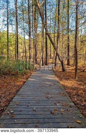 Beautiful wooden walkway in the forest