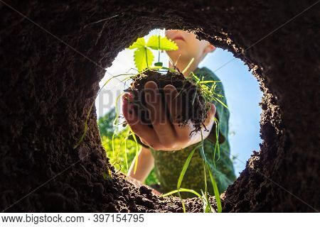 Child Plants Plant In Hole In Backyard. Gardening And Planting Tree Or Seedling In Fertile Soil. Spr