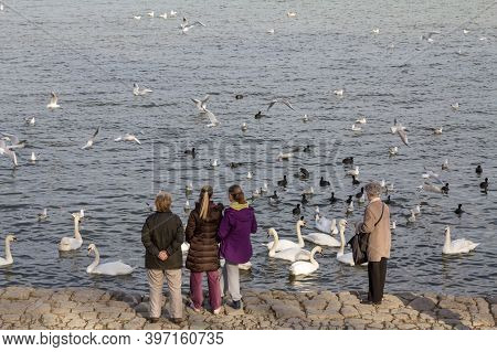 Belgrade, Serbia - February 2, 2016: Old Woman And Young Girls Feeding A Flock Of Swans On The Danub