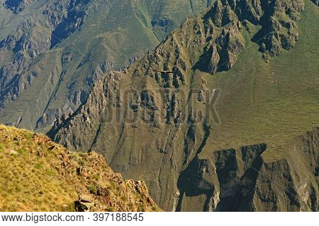 Amazing View Of Colca Canyon With Flying Andean Condor, Cruz Del Condor Viewpoint, Arequipa Region,