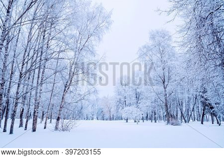 Winter trees in the park, winter landscape with winter forest trees covered with fresh snow, winter December landscape forest scene