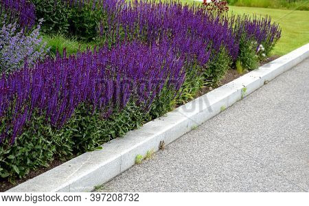 Garden, Flower, Flowers, Green, Nature, Plant, Purple, Spring, Path, Park, Bloom, Summer, Grass, Pin