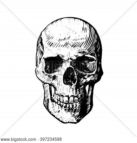 Vector Icon Of A Human Skull On A White Background. Pen Drawing Human Skull, Human Head, Isolated Ob