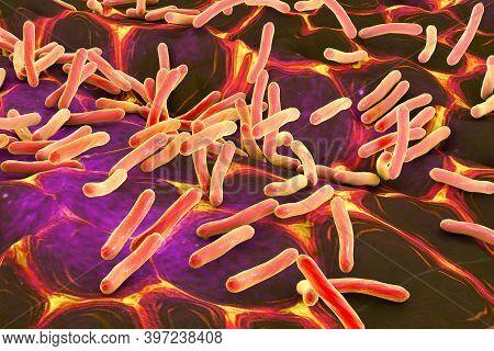 Rod-shaped Bacteria. 3D Illustration
