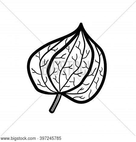 Physalis. Plant. Logo Monochrome Design. Line Art. Ink Vector Illustration. Isolated On White Backgr