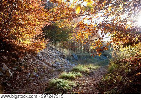 Autumn Landscape. Sunny Countryside View With Path, Mountains. Forest With Colorful Yellow And Orang