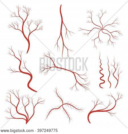 Set Of Human Veins Or Vessel, Red Capillaries, Arteries, Eye Vein. Blood System Icon. Concept Anatom