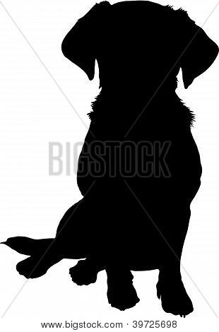 Mixed Breed Puppy Silhouette