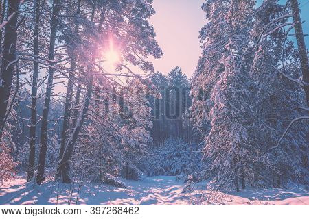 Nature Winter Background. Beautiful Scenic Landscape. Snowy Forest.  Pine Trees Covered With Snow. W