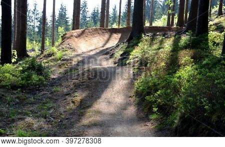 Spruce Forest In Which There Is A Track For Bicycles Trail Tilted Bends One After The Other Dug In T