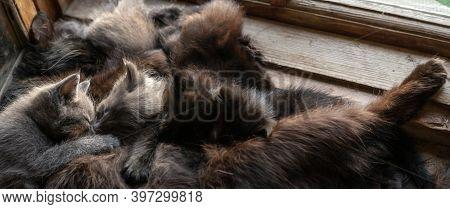 Mother Cat Feeds Her Kittens On Windowsill