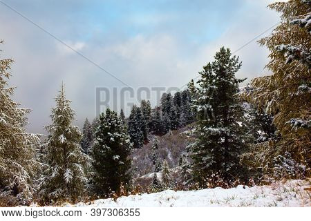 Dolomite Alps. The first snow fell. Dolomites. Huge evergreen spruce powdered with the first snow.  Concept of extreme, active, eco and photo tourism