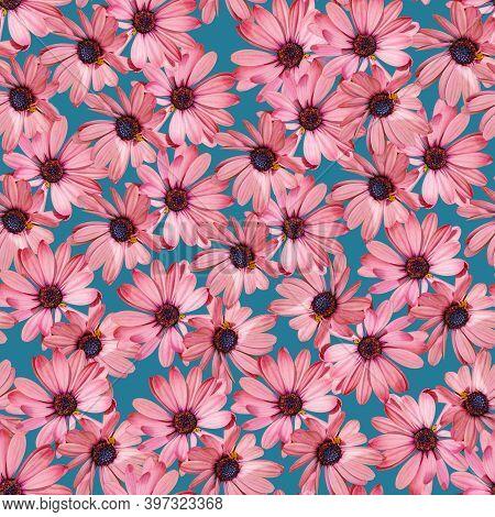 Floral Pink Gazania Seamless Pattern On Blue Background
